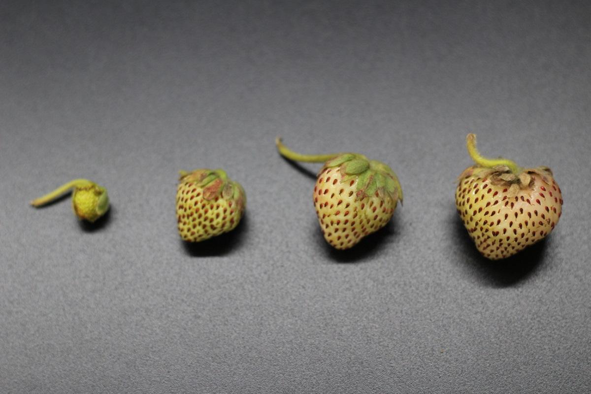 Investigación de U. Autónoma en frutos nativos promueve mejora en prácticas agrícolas del Maule